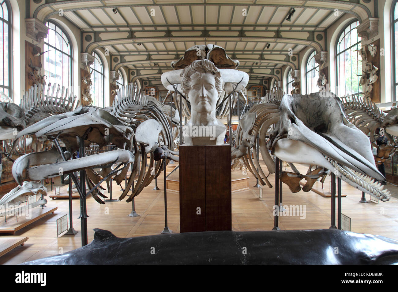 The Gallery of Paleontology and Comparative Anatomy, Paris. - Stock Image