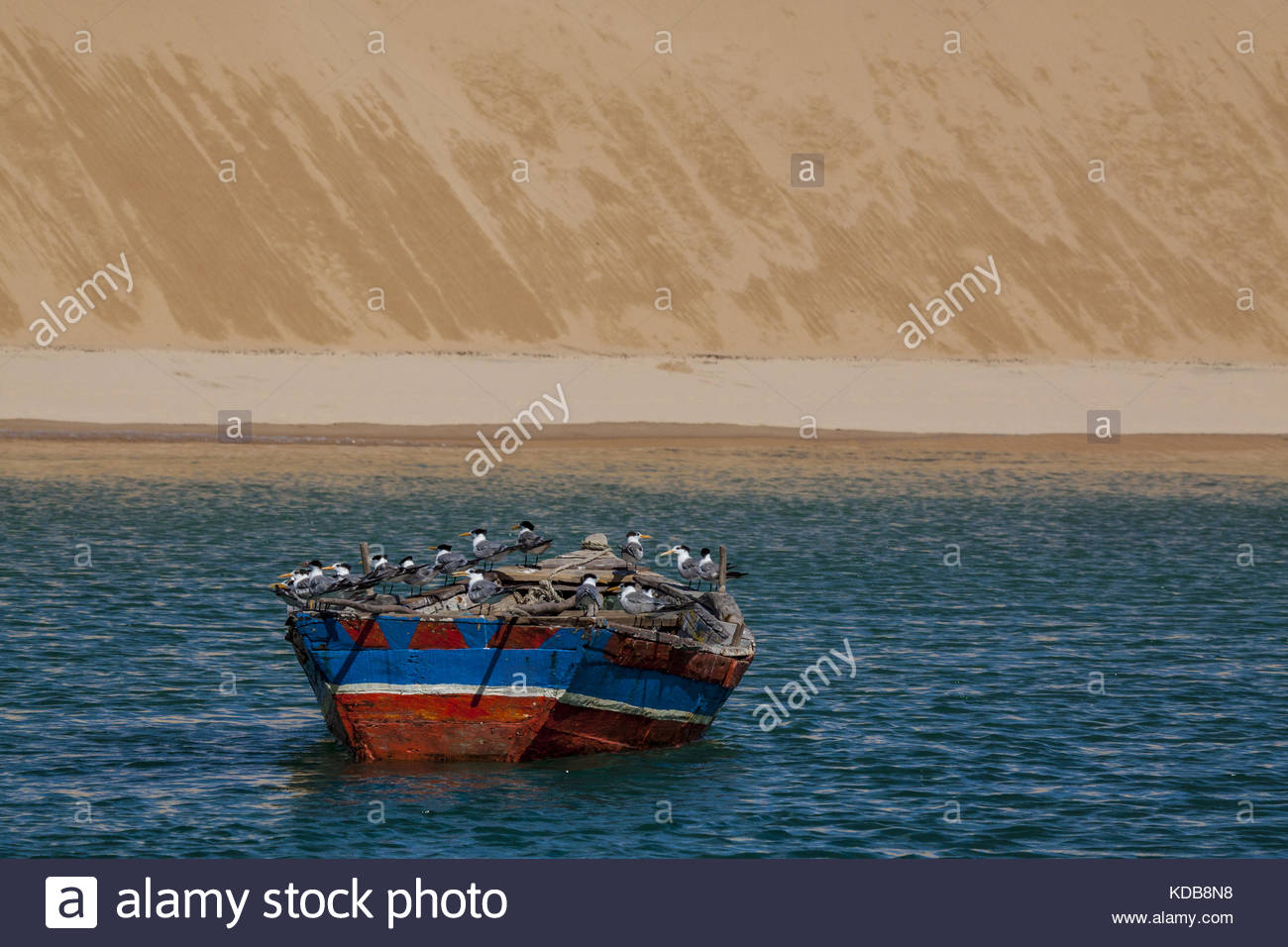 Elegant Terns, Thalasseus Elegans, use an anchored boat as a vantage point to spot fish. - Stock Image