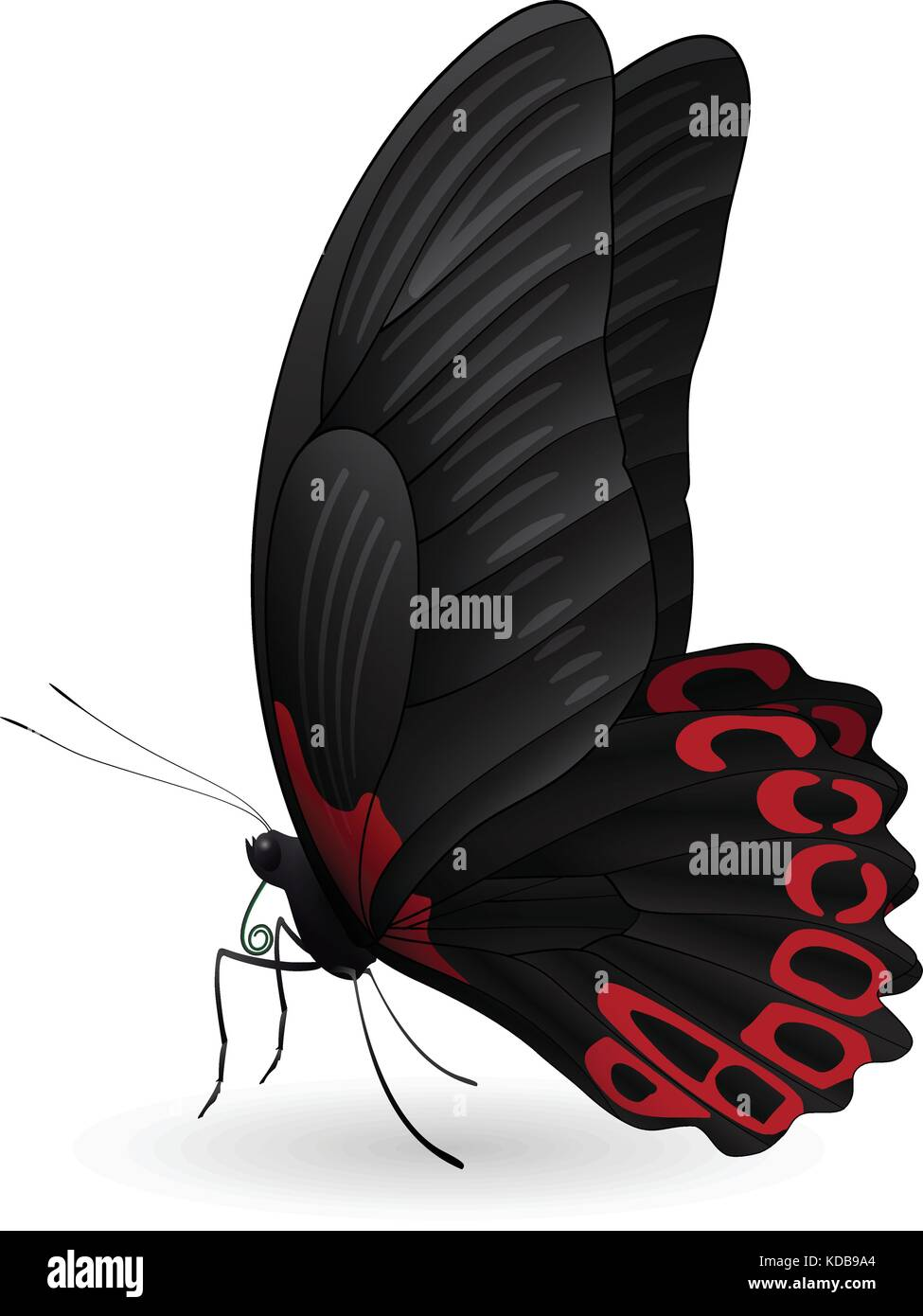 Beautiful butterfly isolated on a white background - Stock Vector