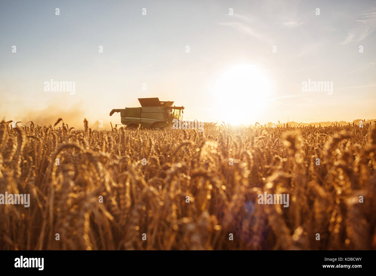 Combine harvester on the field at sunset - Stock Image