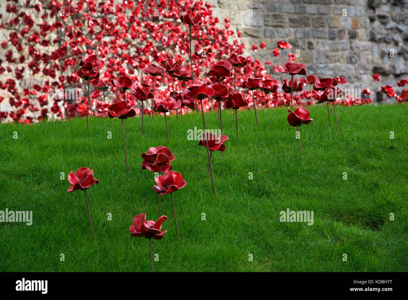 Weeping Window Poppy Sculpture by Paul Cummins and Tom Piper at Caernarfon Castle 2016 - Stock Image