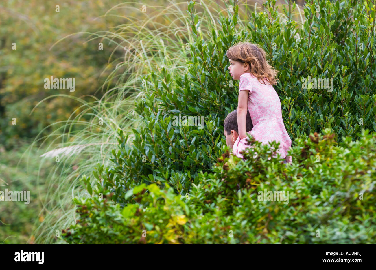 Young girl being carried on a man's shoulders, a piggyback ride, through a park in the UK. - Stock Image