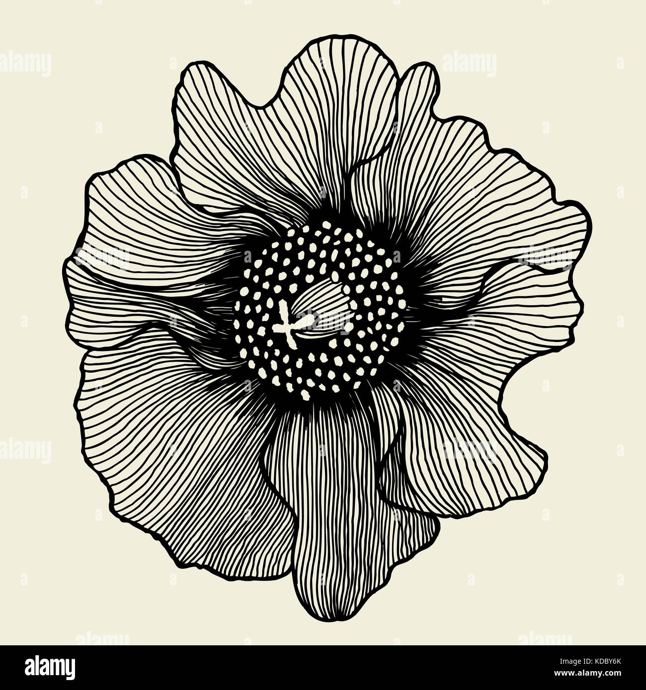 poppy flower. isolated for greeting cards and invitations of the wedding, birthday, Valentine s Day, mother s day - Stock Vector