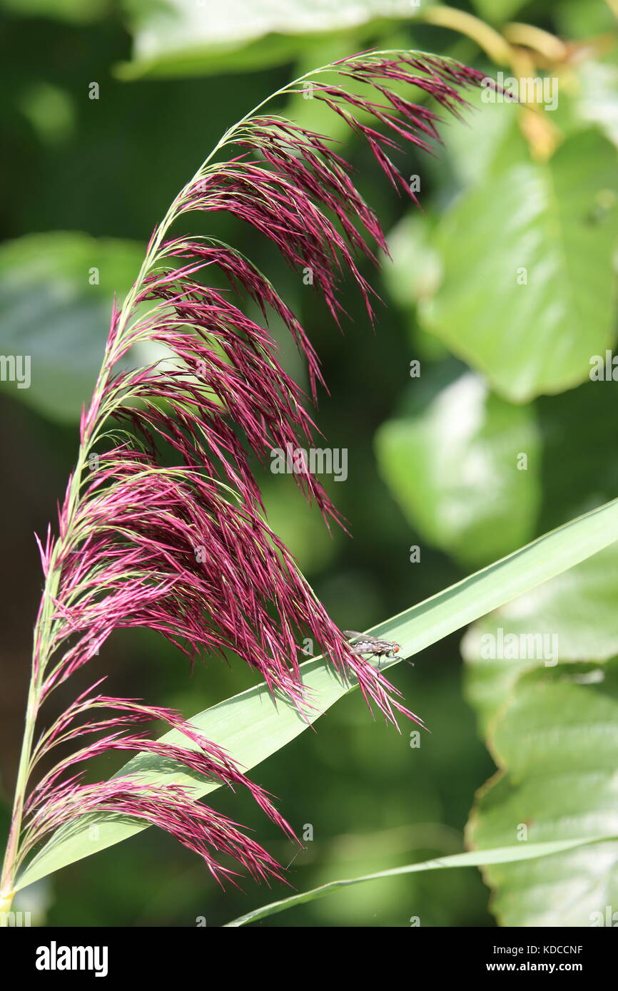 Blooming grass Stock Photo