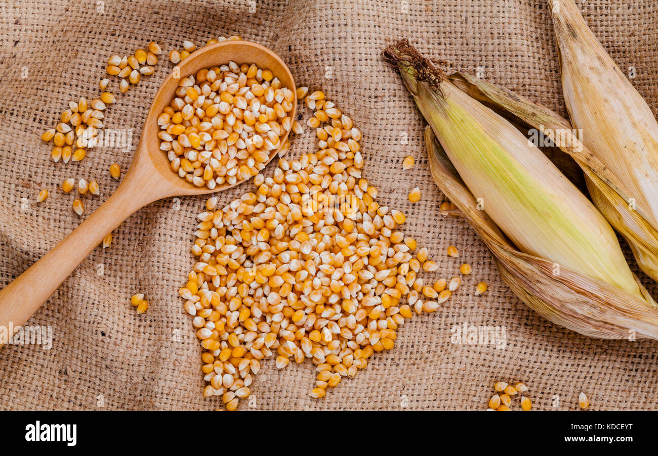 Grains of dried sweet corn in the wooden spoon with sweet corn on hemp sacks background . - Stock Image