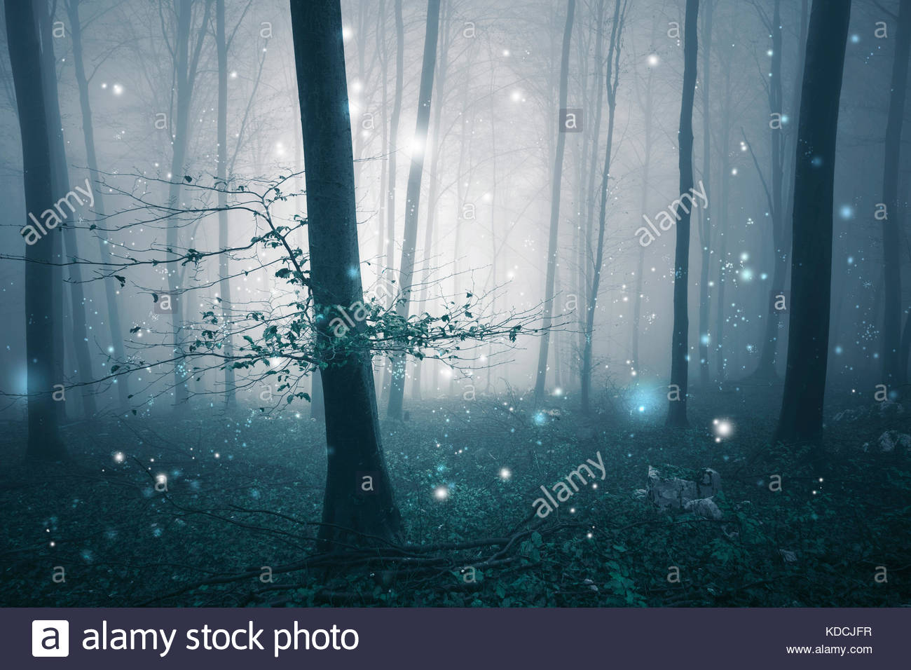 Dark blue foggy forest fairytale with fireflies bokeh background. Color filter effect used. - Stock Image