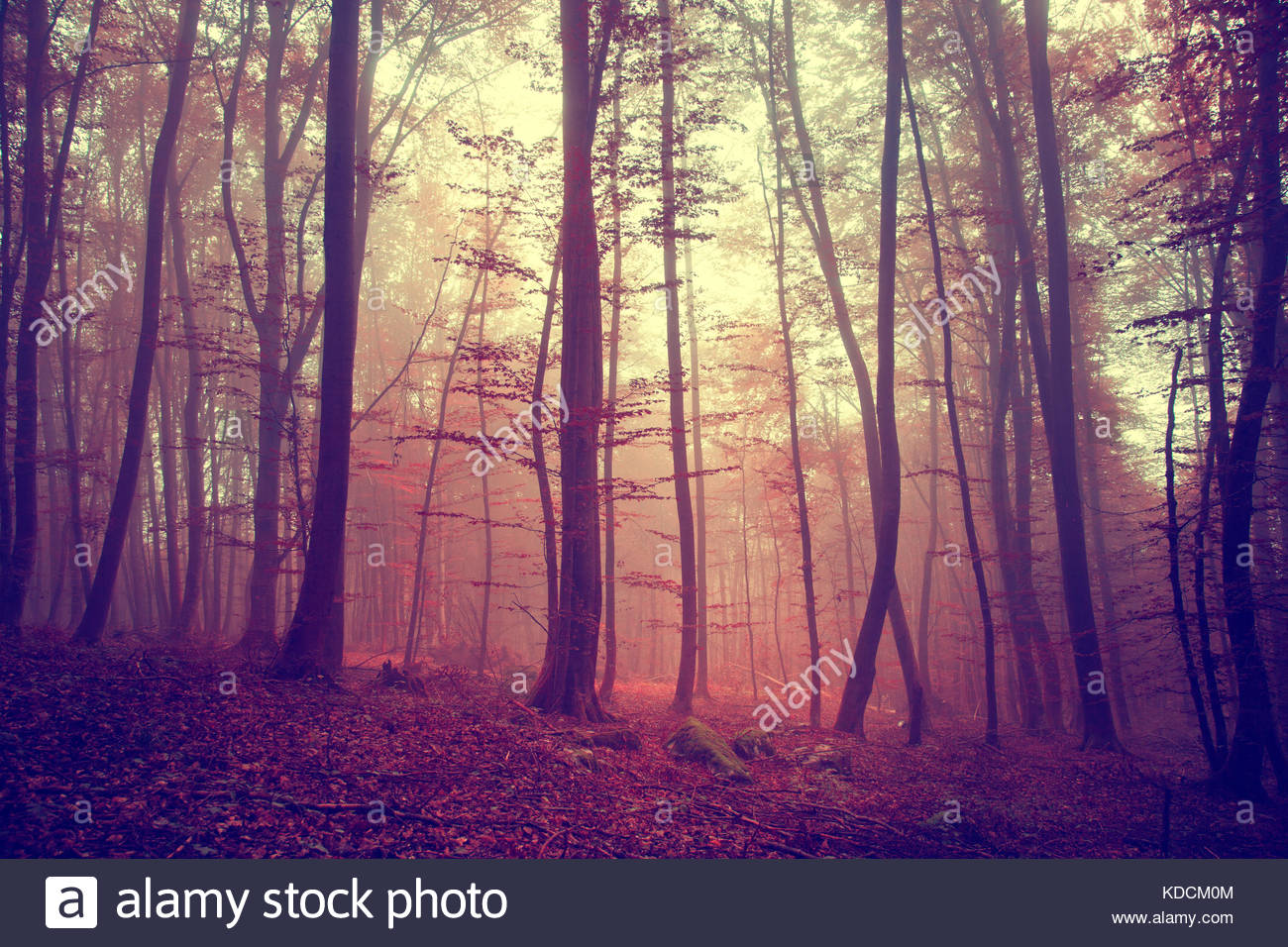 Magic light red color autumn season forest.Vintage color filter effect used. - Stock & Vintage Magic Red Colored Foggy Stock Photos \u0026 Vintage Magic Red ...