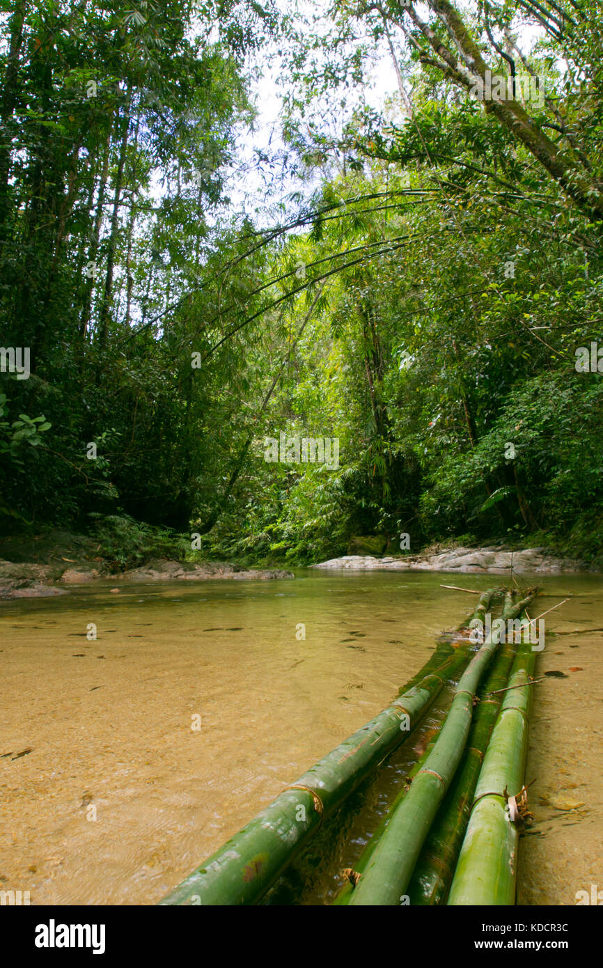 Tropical rainforest, Chemerong Berembun Langsir, CBL, malaysia - Stock Image