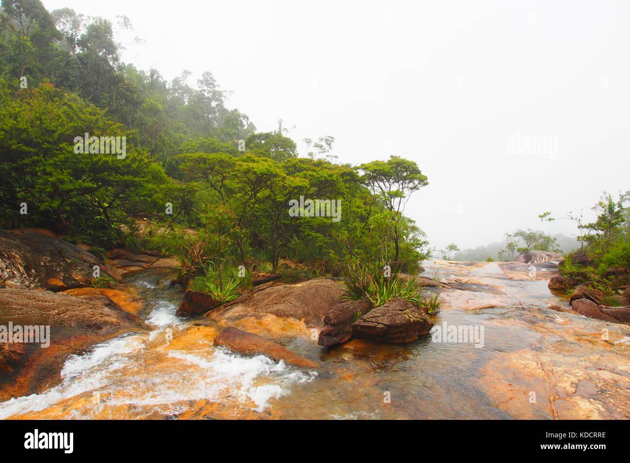 Misty tropical rainforest, Chemerong Berembun Langsir, CBL, malaysia - Stock Image