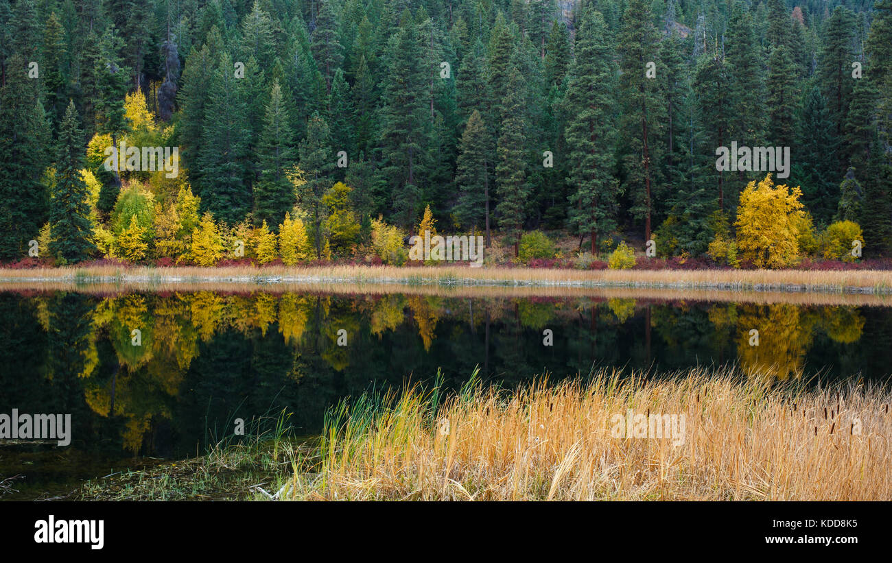 A quiet mountain lake with cattails along the shoreline showing reflection of Autumn colors mixed with evergreen - Stock Image
