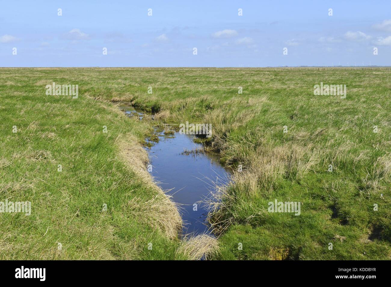 Blue shimmering water hole in a green flat pastureland on the small island Hallig Oland, 21 April 2016 | usage worldwide - Stock Image