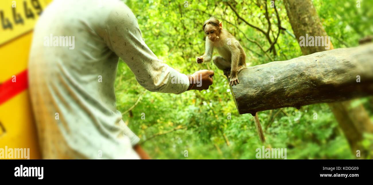 Young boy feeding a small monkey . Stock Photo