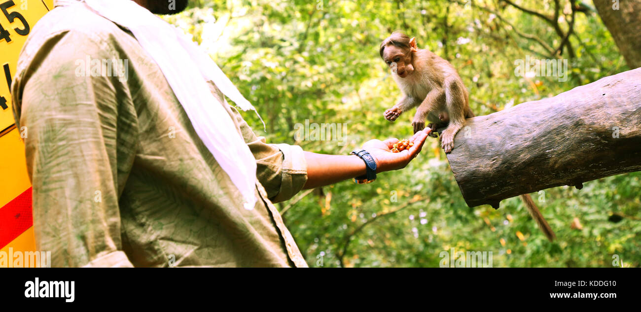 Young man feeding a small monkey Stock Photo