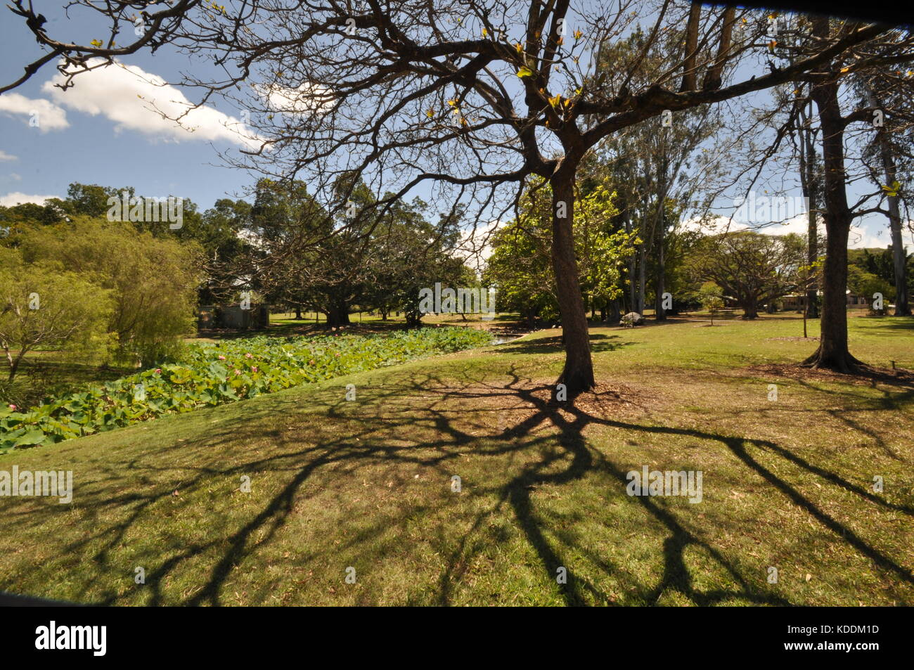 Anderson Park Botanical Gardens, Townsville, Queensland, Australia - Stock Image