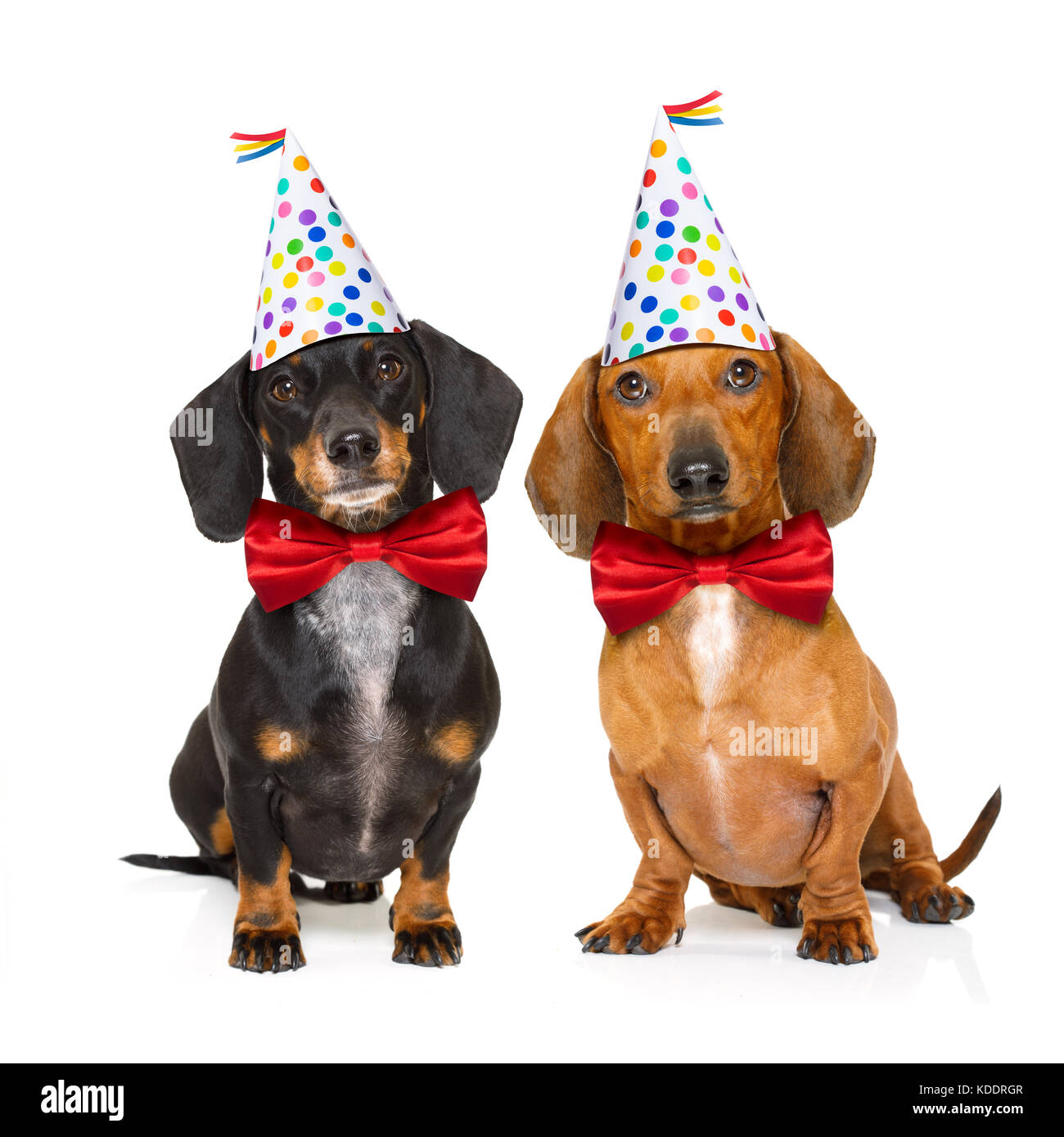 Couple Of Two Dachshund Or Sausage Dogs Hungry For A Happy Birthday Cake With Candles Wearing Red Tie And Party Hat Isolated On White Backgroun