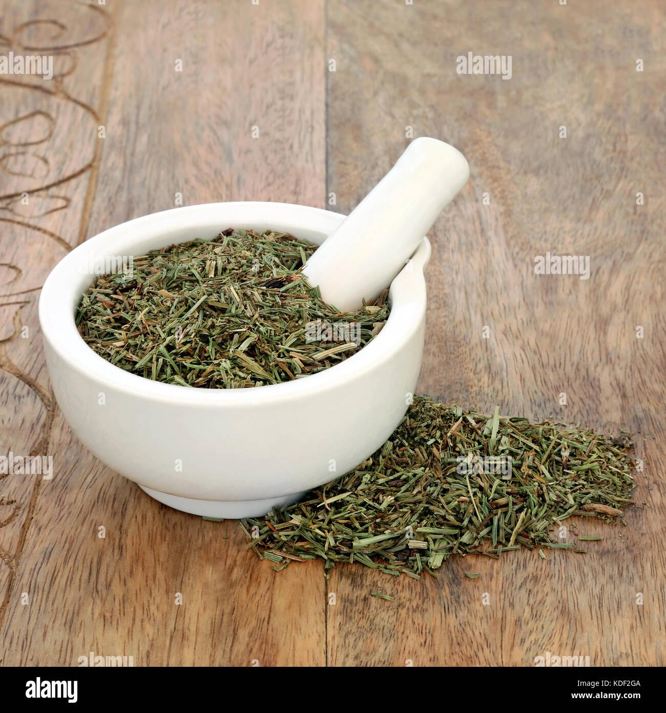 Horsetail leaf herb used in alternative herbal medicine and has anti inflammatory, anti bacterial, diuretic, antiseptic and astringent properties. Stock Photo