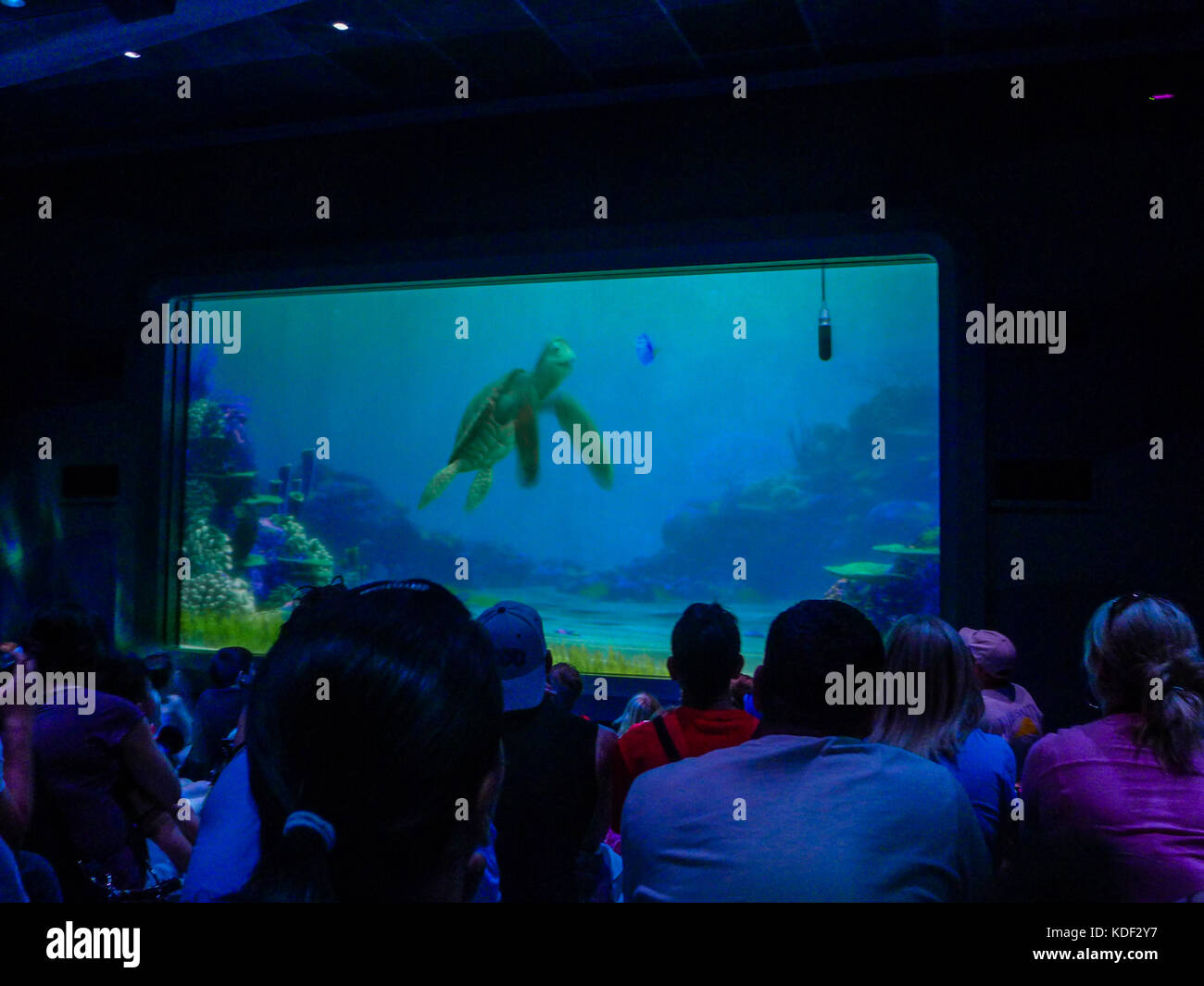 finding nemo stock photos finding nemo stock images alamy. Black Bedroom Furniture Sets. Home Design Ideas