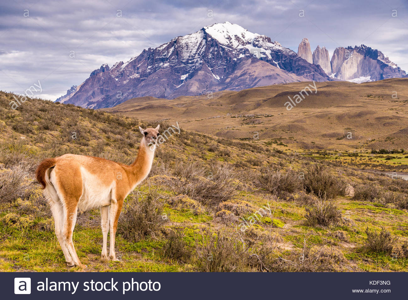 Torres del Paine National Park - Stock Image