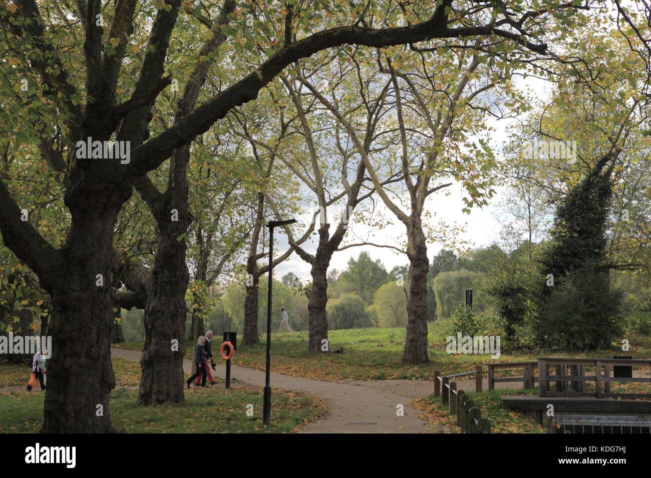 Hampstead Heath, autumn tress. - Stock Image