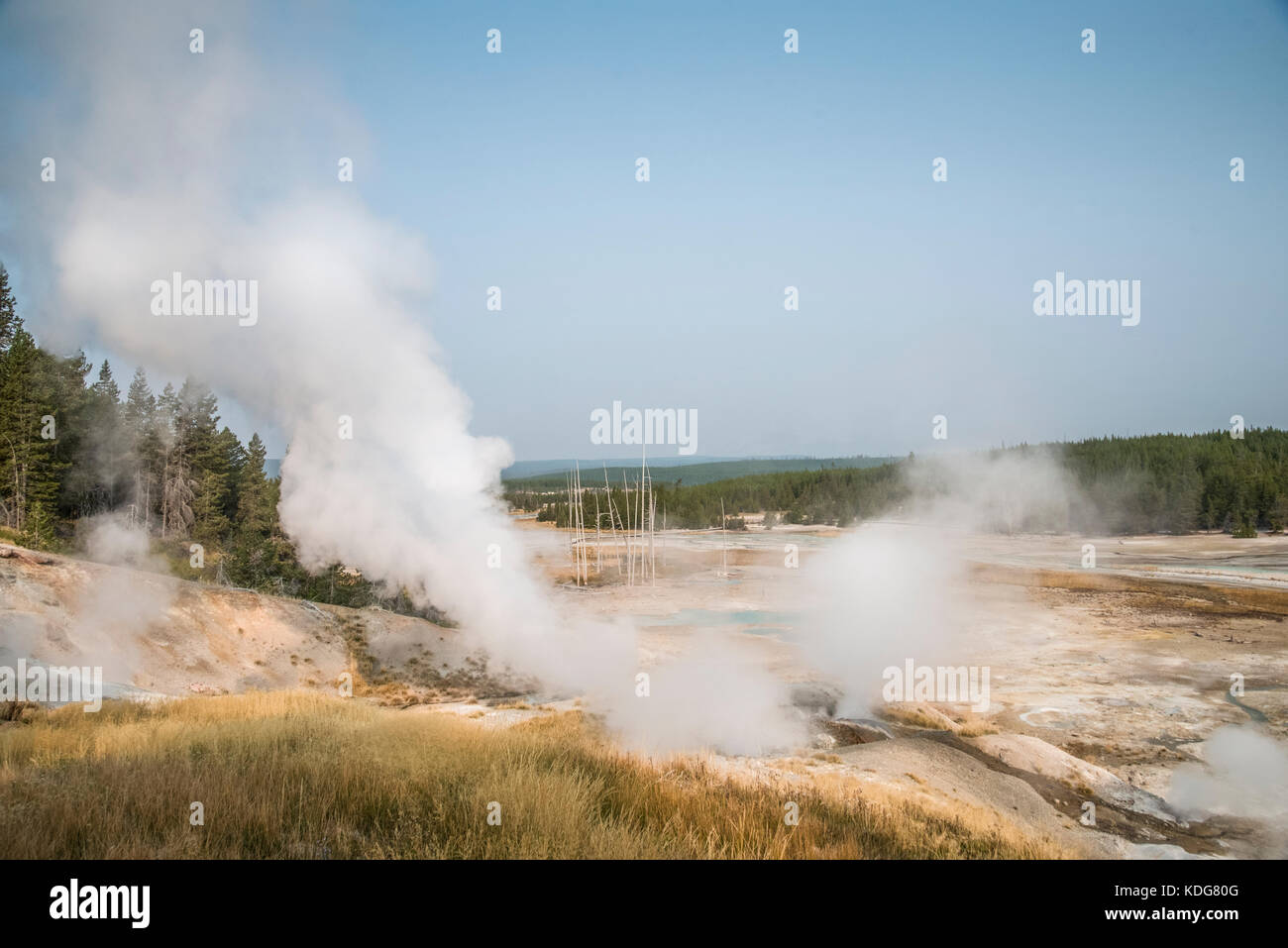 Geo-thermal landscape scenery at Norris Geyser Basin in West Yellowstone National Park - Stock Image