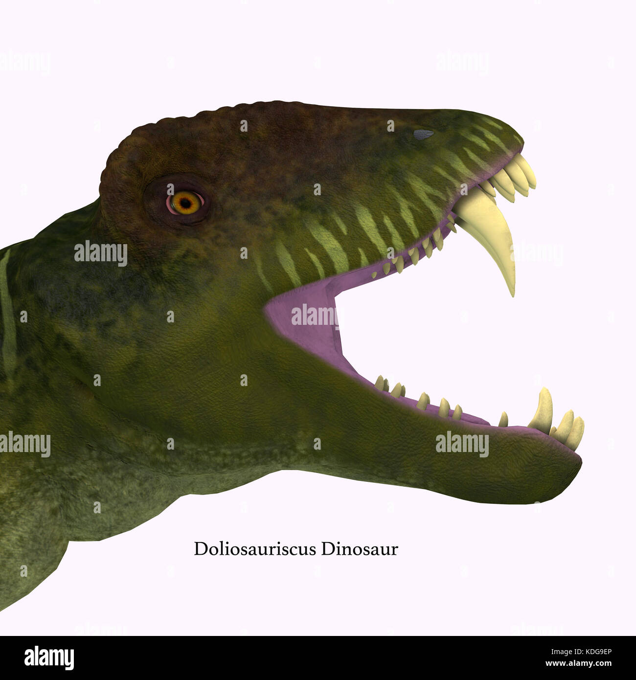 Doliosauriscus Dinosaur Head  - Doliosauriscus is an extinct genus of therapsid carnivorous dinosaur that lived - Stock Image