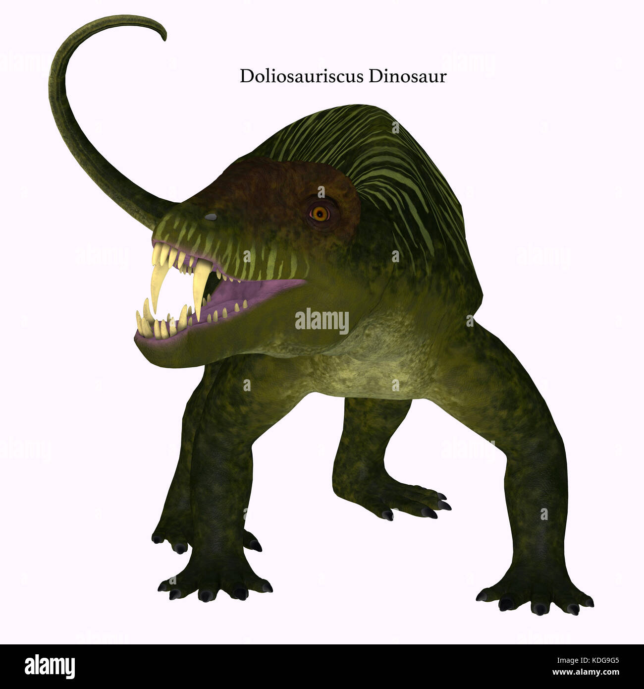 Doliosauriscus Dinosaur on White - Doliosauriscus is an extinct genus of therapsid carnivorous dinosaur that lived - Stock Image