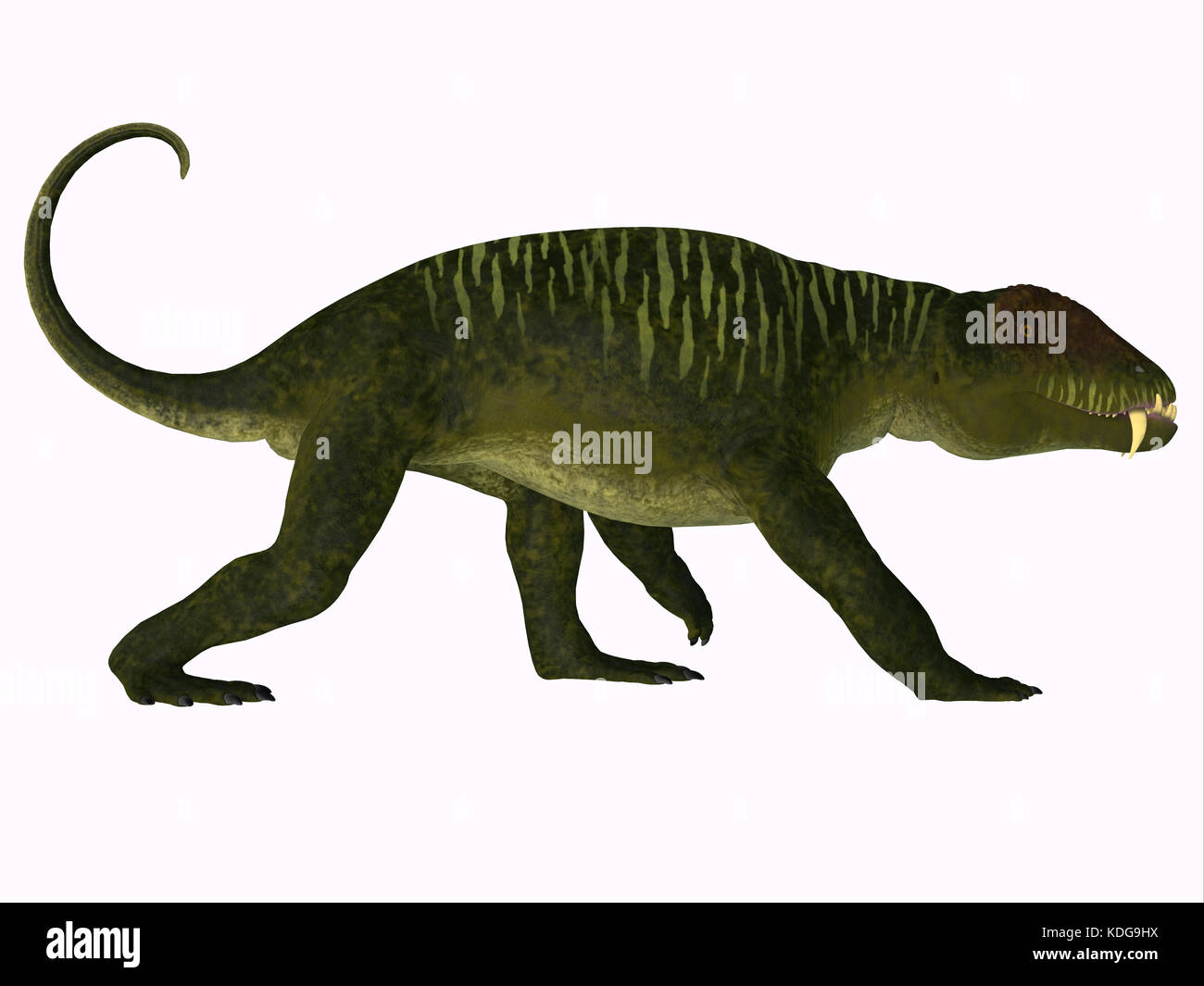 Doliosauriscus Dinosaur - Doliosauriscus is an extinct genus of therapsid carnivorous dinosaur that lived in Russia - Stock Image