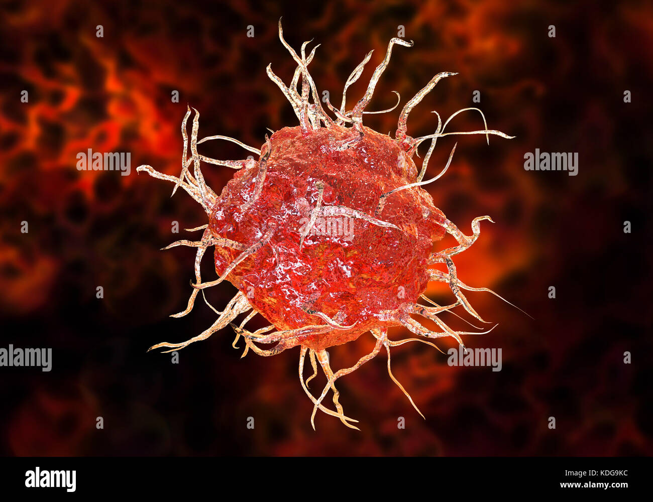 Dendritic cell, computer illustration. A dendritic cell is a type of white blood cell. It is an antigen- presenting - Stock Image
