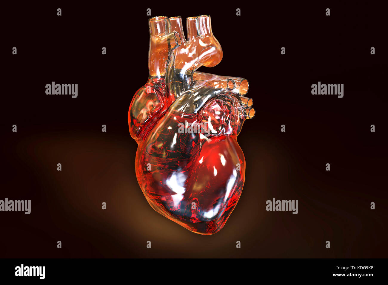 Computer illustration of the heart with coronary vessels. - Stock Image