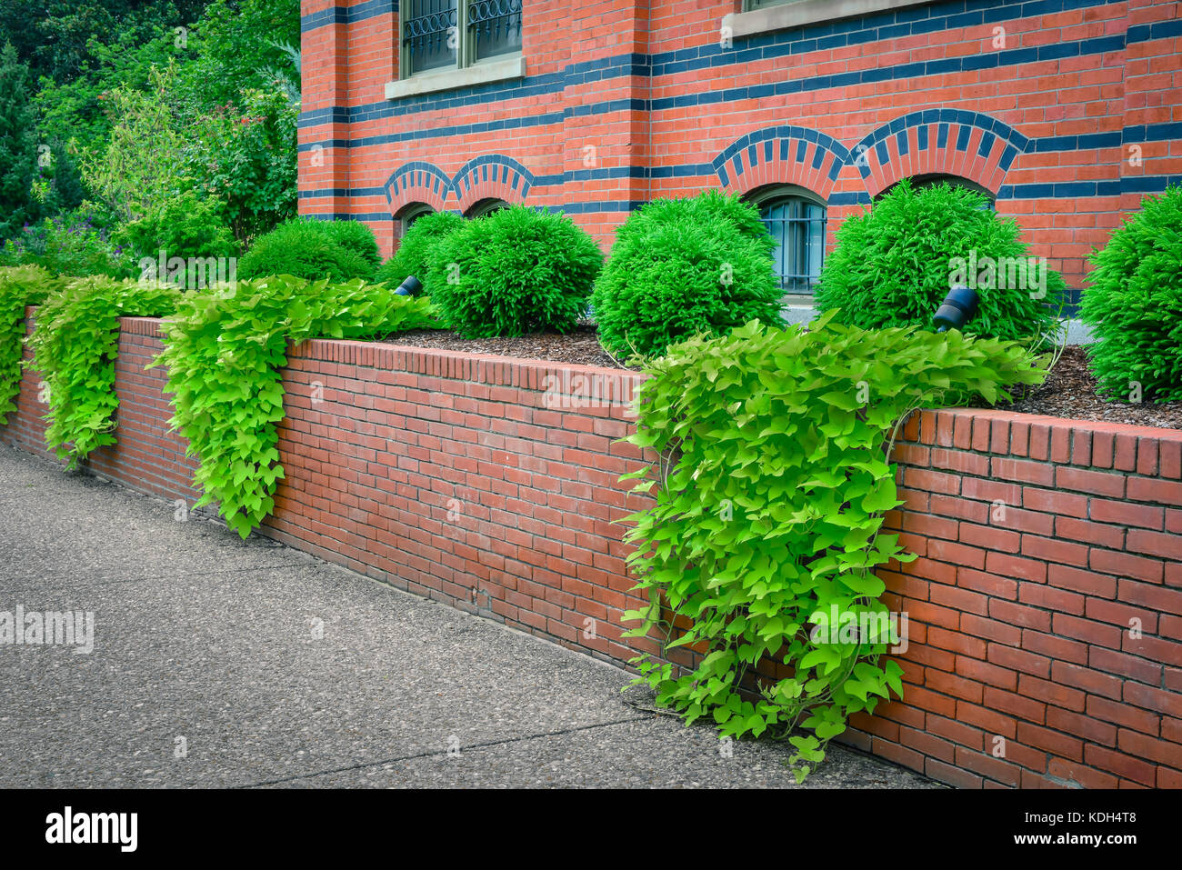 Ivy climbs down the red brick walls surrounding the Smithsonian's Arts and Industries Buildings in Washington, - Stock Image