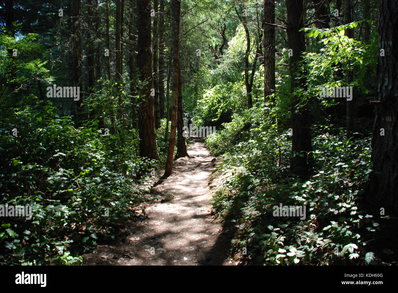 East Sooke Park, near Victoria, BC, Canada is the perfect place for a Sunday stroll or a longer hike - Stock Image
