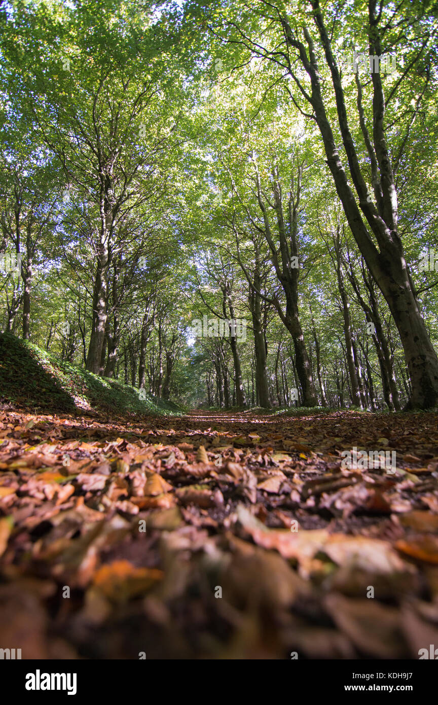 Nature's beauty, woodland and forest walks in autumn. - Stock Image