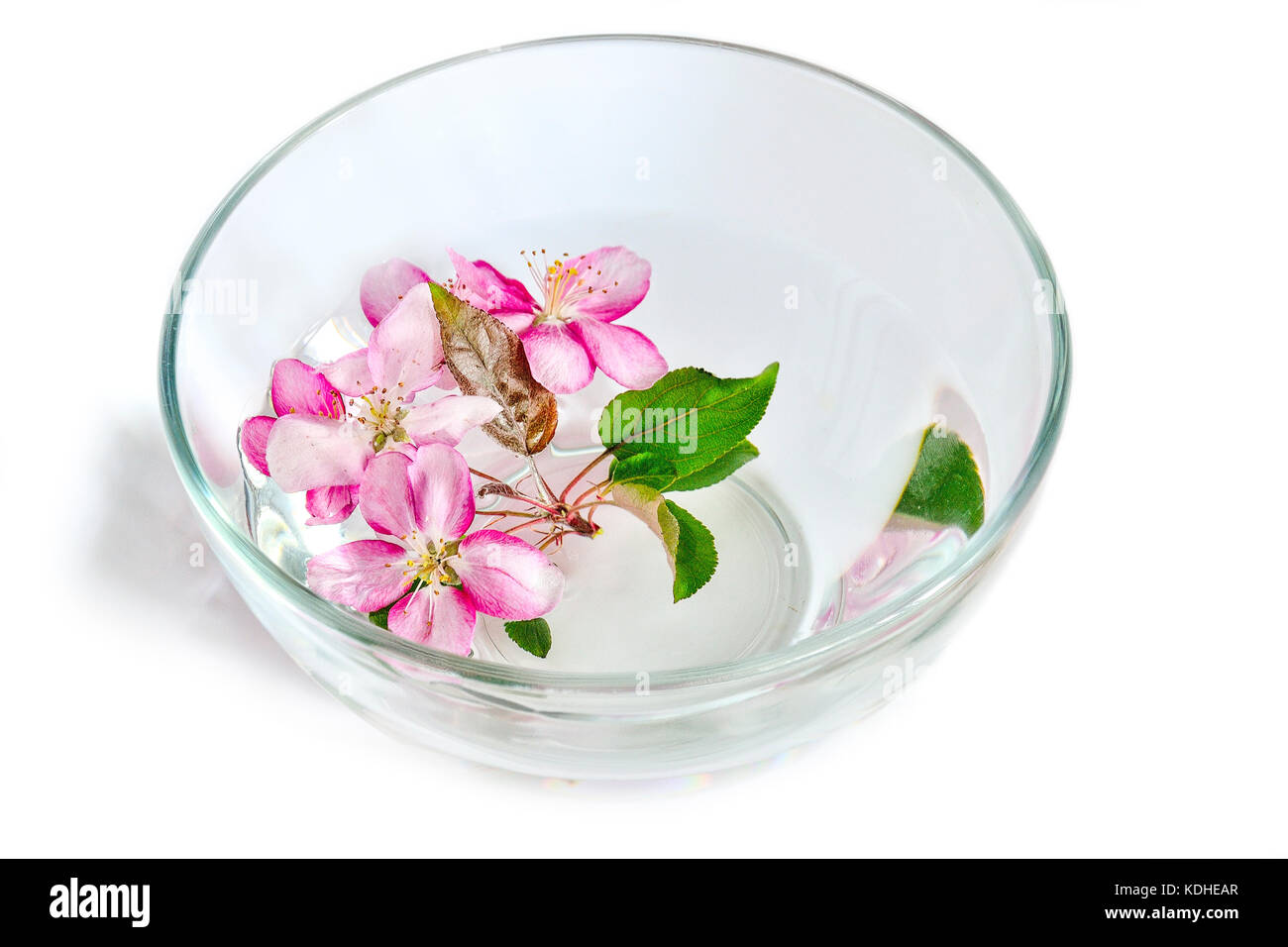 Fresh Pink Cherry Or Apple Tree Flowers Floating In The Glass Bowl