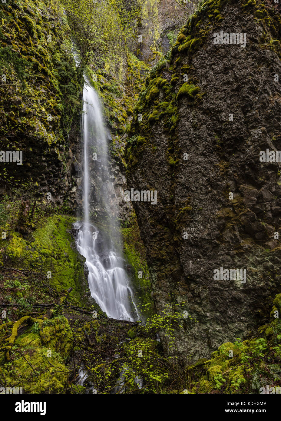 Starvation Creek Falls in the Columbia Gorge - Stock Image