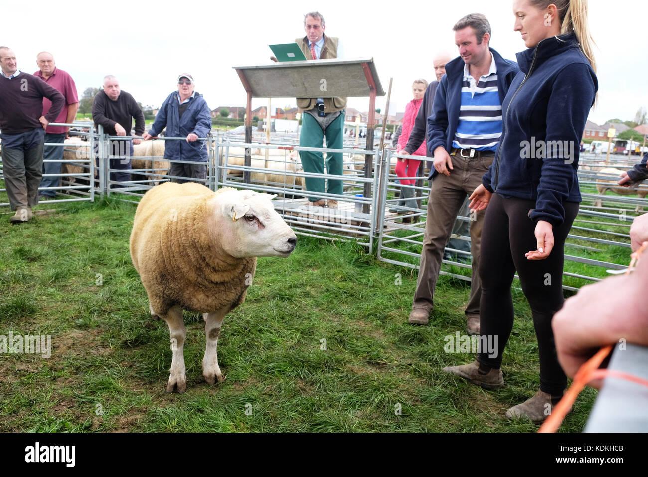 Tenbury Wells, Worcestershire, UK. 14th October, 2017. Sheep auction at Tenbury Wells, Worcestershire, UK - Saturday Stock Photo