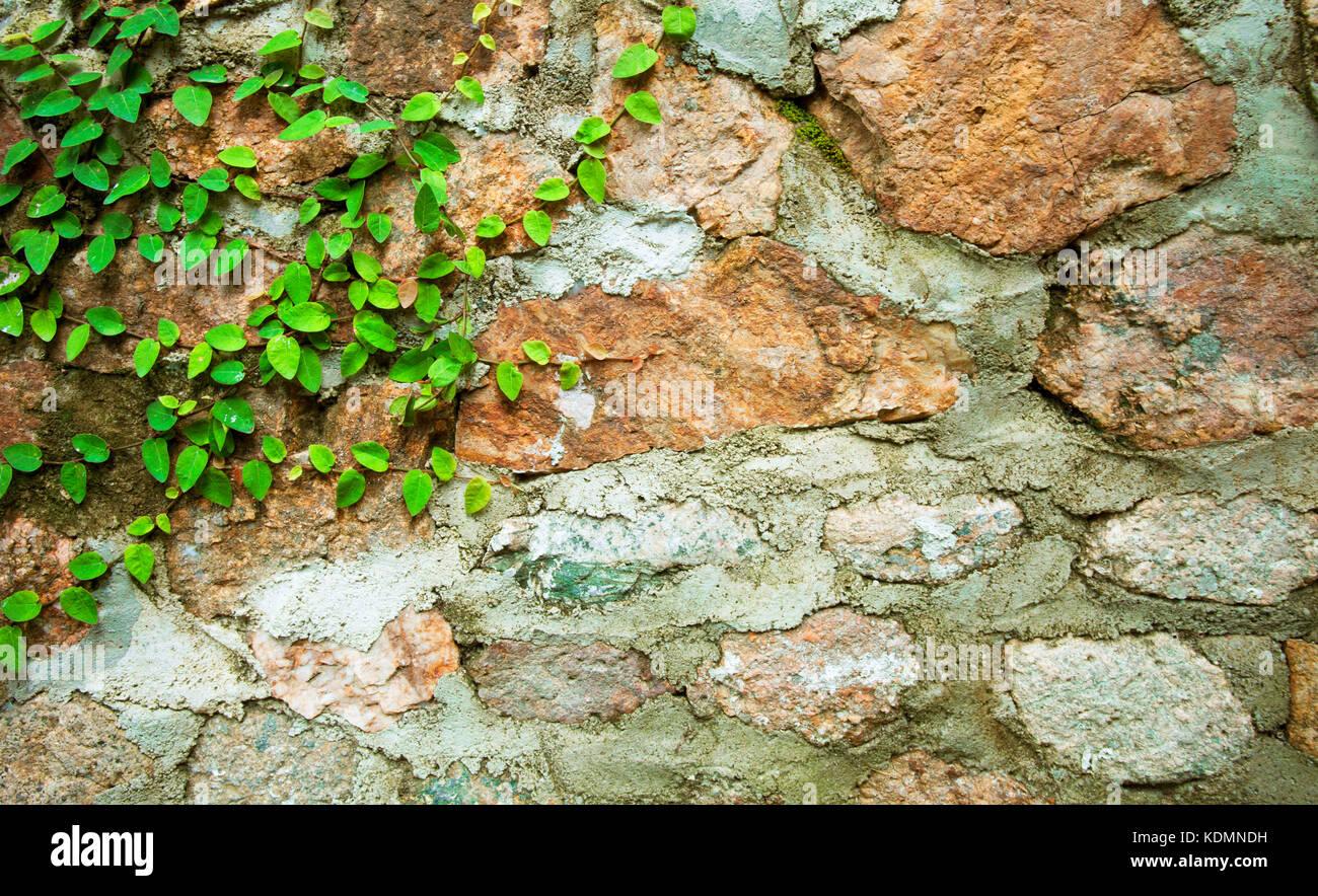 Green Velcro tree on stone wall. - Stock Image