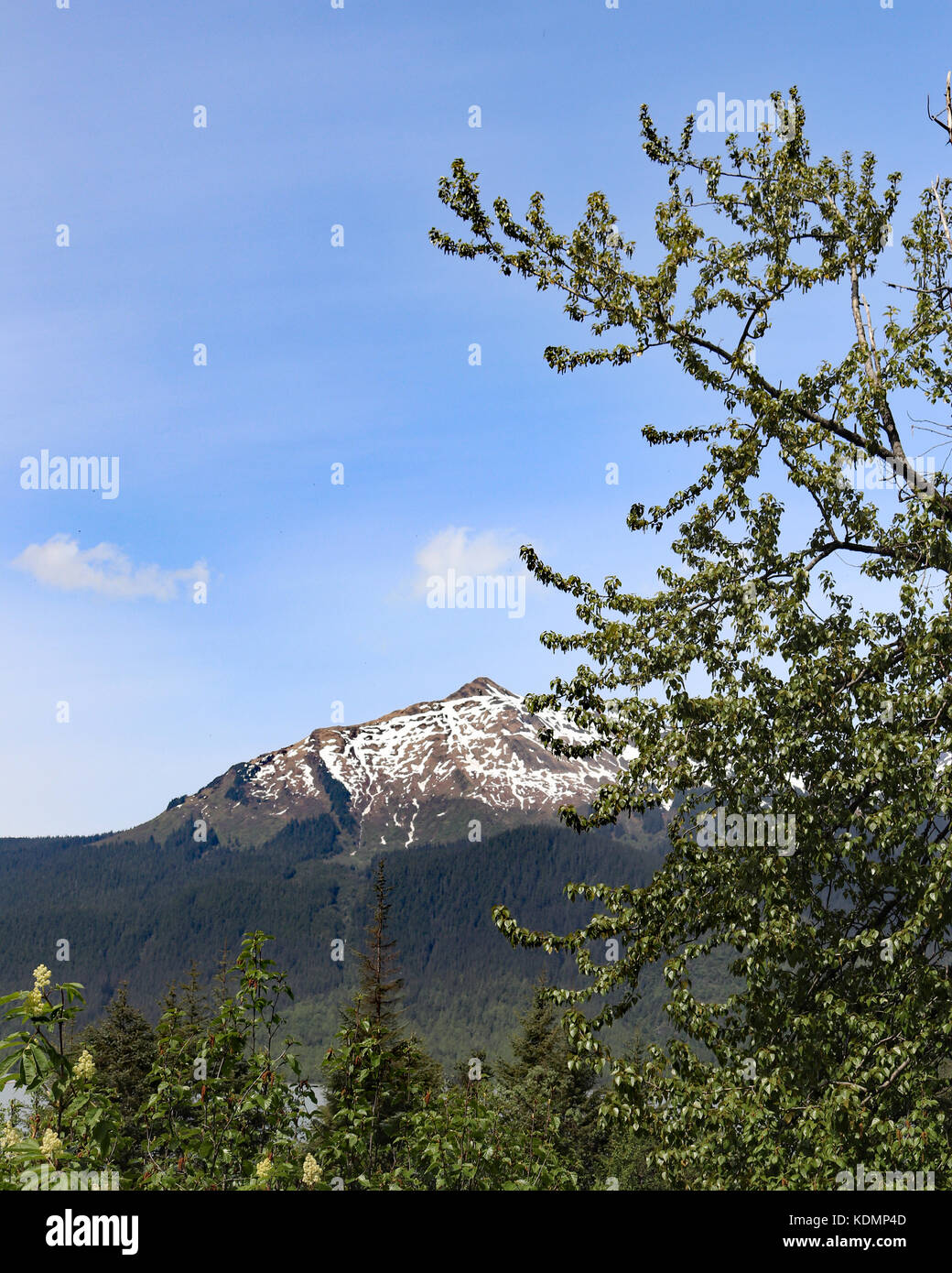 Pine trees and mountains surrounding the Mendenhall Glacier Recreational Area in Juneau, Alaska - Stock Image