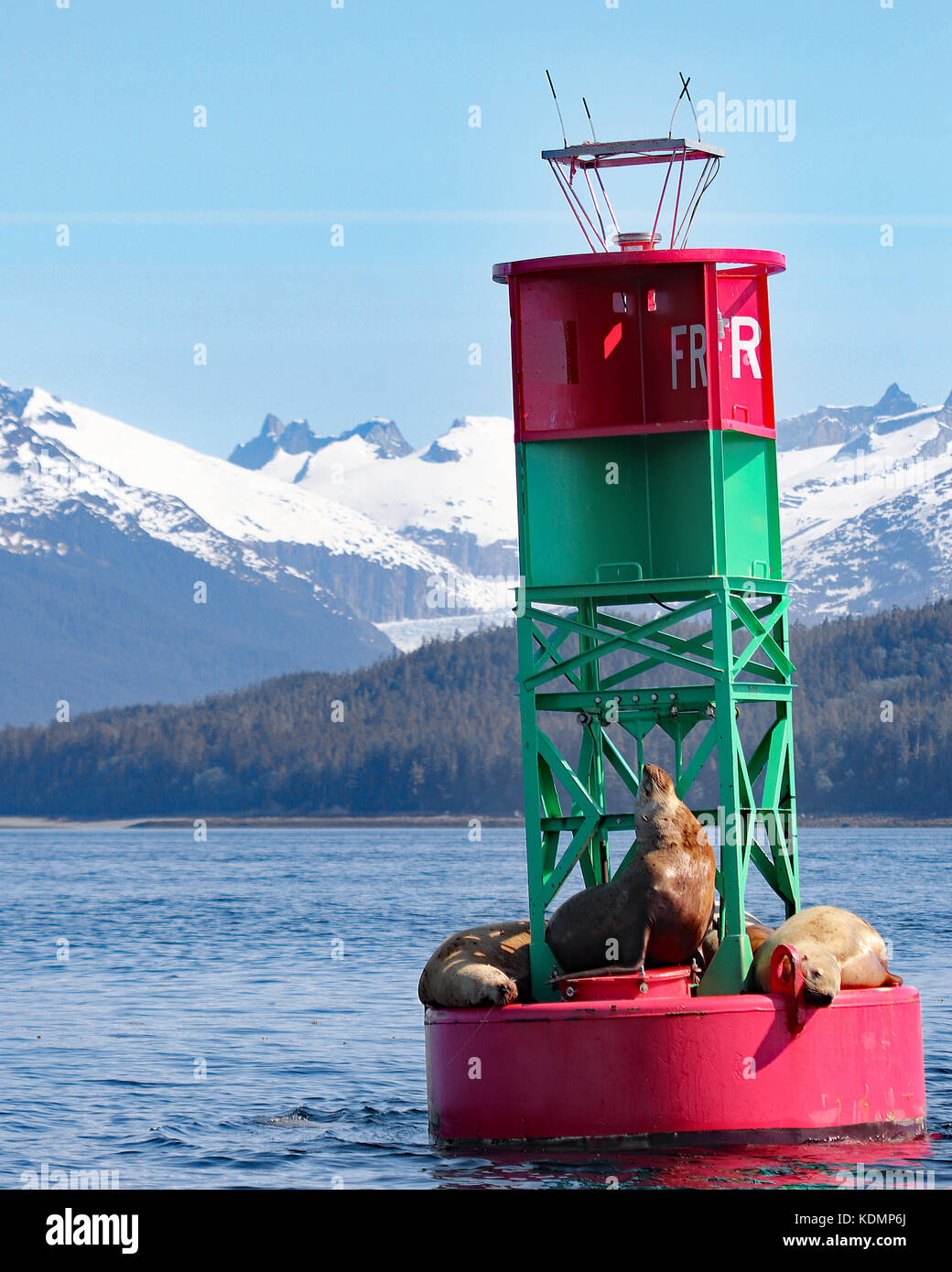 Adorable Sea Lions floating on buoy with mountain landscape background. Juneau, Alaska - Stock Image