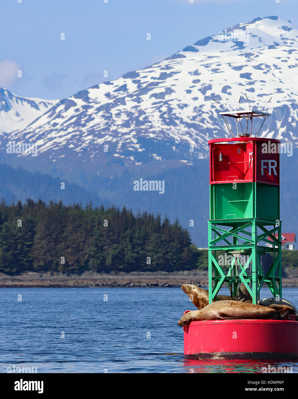 In the channels around Juneau, Alaska red and green buoys float covered in adorable Stellar Sea Lions just enjoying - Stock Image