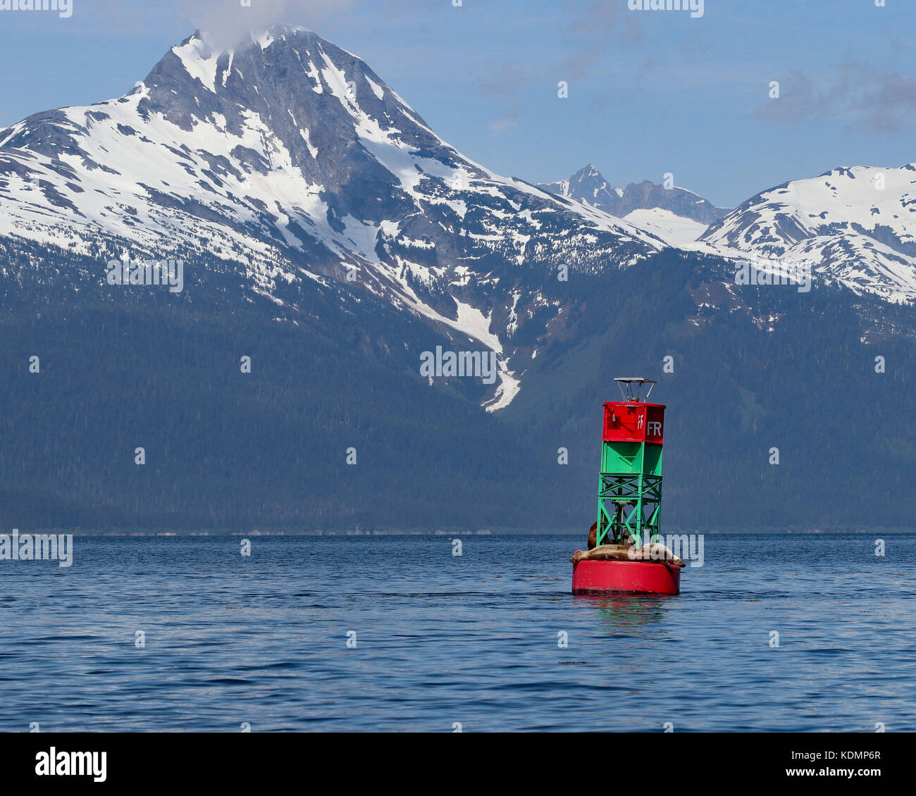 Stellar Sea Lions floating on a red and green buoy near snow capped mountain peaks of Juneau, Alaska - Stock Image
