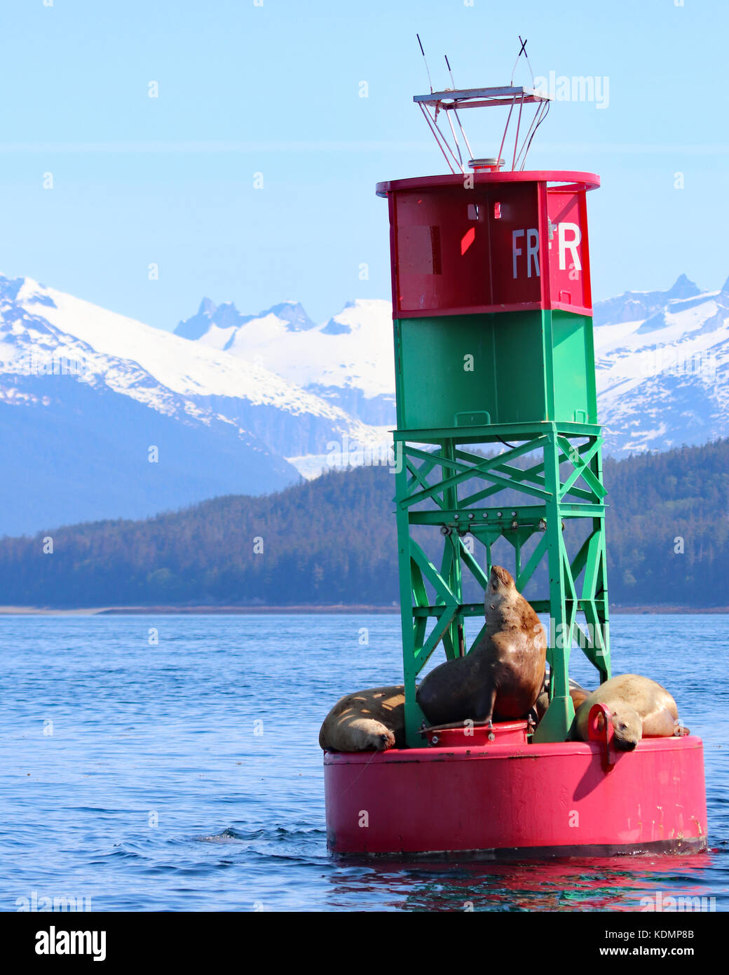 Stellar Sea Lions resting on buoy in Juneau, Alaska with snow capped mountain background - Stock Image