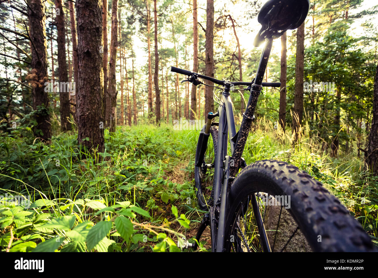 Mountain bike MTB on green summer forest trail, inspirational landscape. Cycling bike on rural country trail. Sport - Stock Image