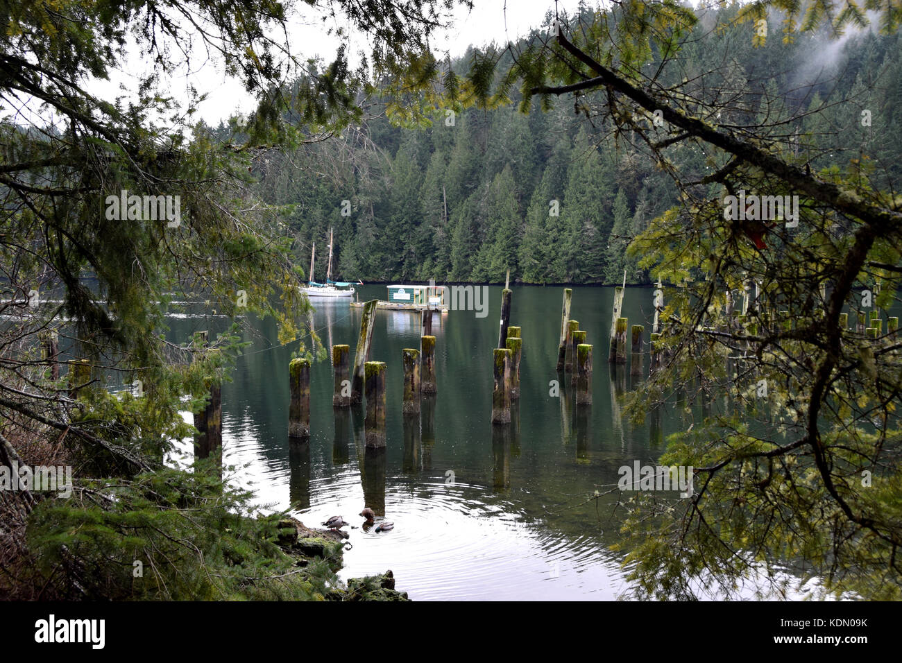 Hiking near Witty's Lagoon - Vancouver Island, BC, Canada - Stock Image