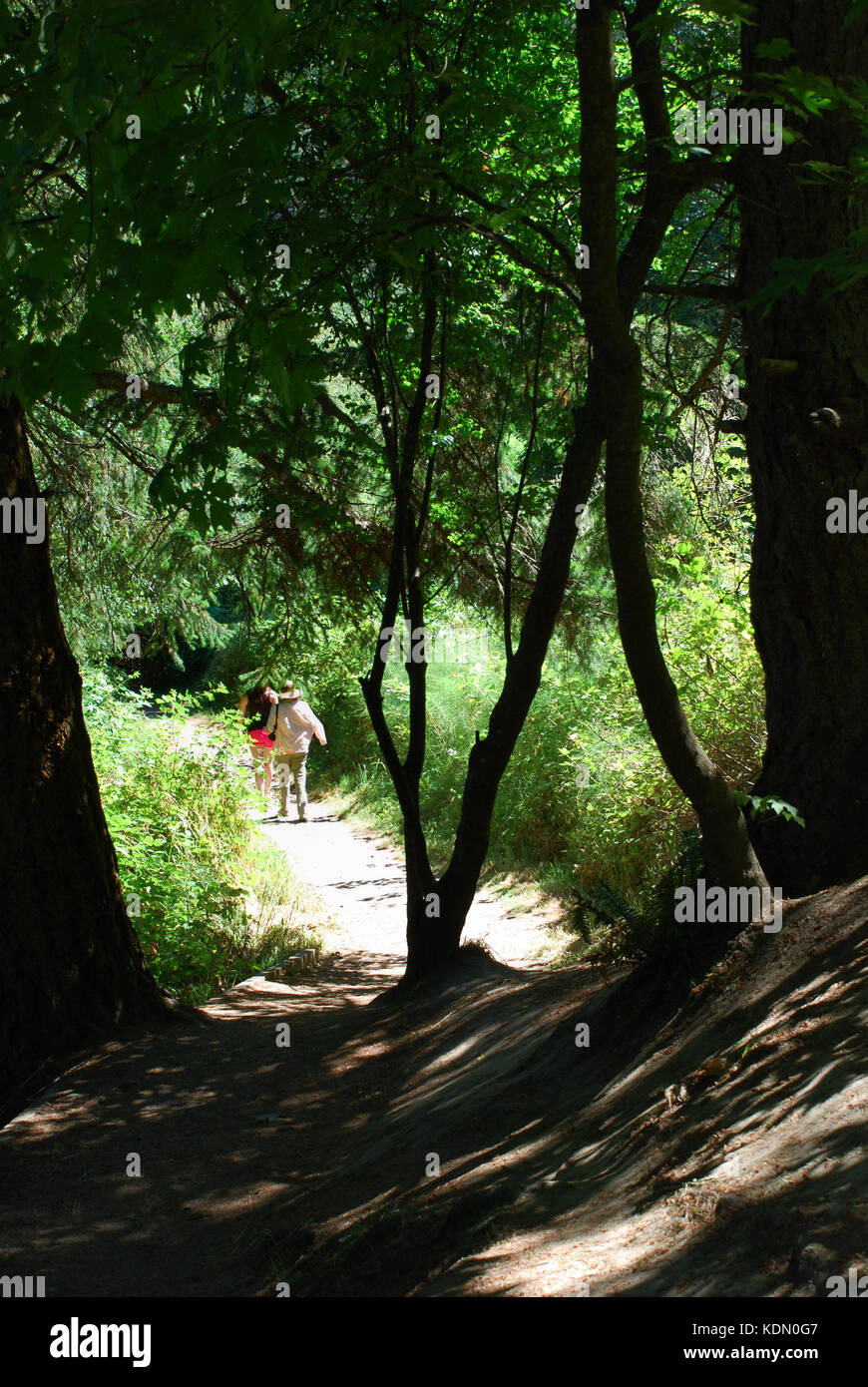 Trees cast shadows over the trail at Witty's Lagoon near Victoria, BC, Canada - Stock Image