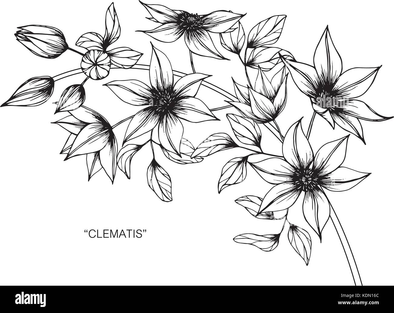 Vintage Flower Illustrations Stock Photos Vintage Flower