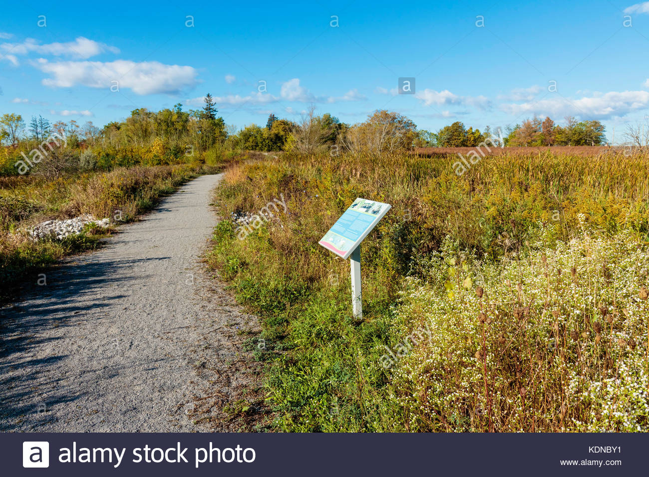 The Tallgrass Trek Trail restored ecosystem in Bob Hunter Memorial Park in Rouge National Urban Park in Markham - Stock Image