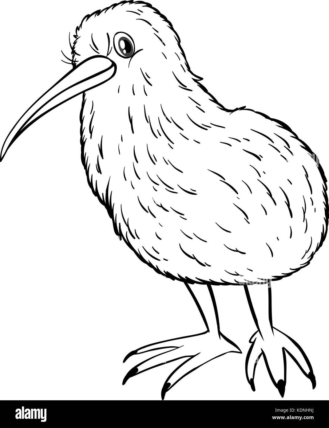 Animal Outline For Kiwi Bird Illustration Stock Vector Art