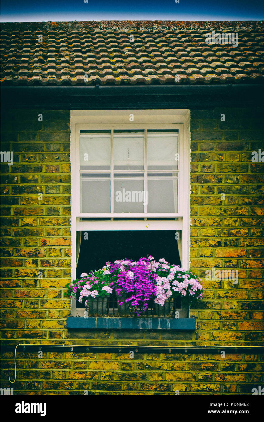 Window with flower box in bloom - Stock Image
