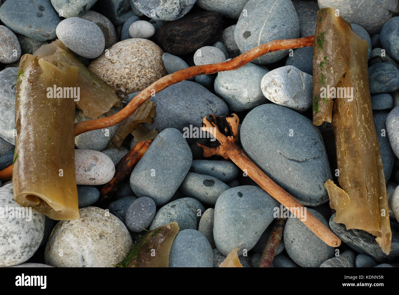 Stones and seaweed - French Beach, Vancouver BC, Canada - Stock Image