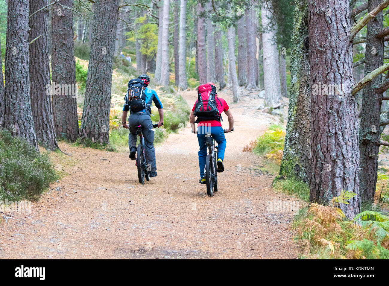 Two mountain bikers on bikes heading towards the Lairig Ghru pass from the Rothiemurchus Estate as they pass through - Stock Image